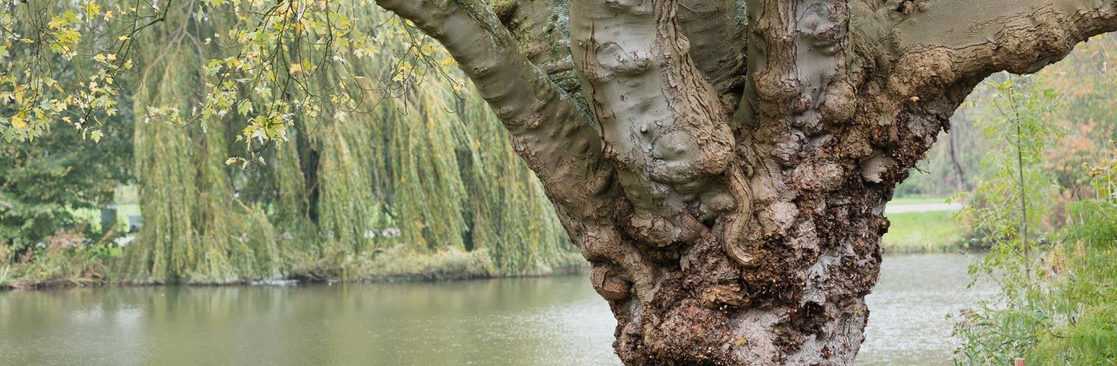 Magiche boom in Flevopark op een mooie dag