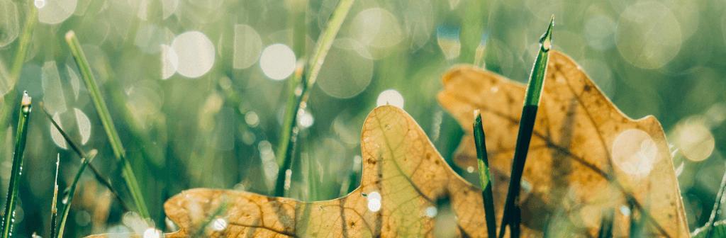 Delen in ons zijn fris en vol in bloei en andere delen komen aan hun eind